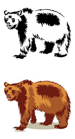 oso negro: oso salvaje aislado en un fondo blanco Vectores