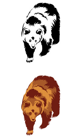 Wild bear isolated on a white background Vector