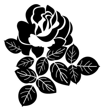 rose: Black rose