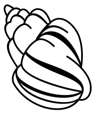 Contour image of a shell