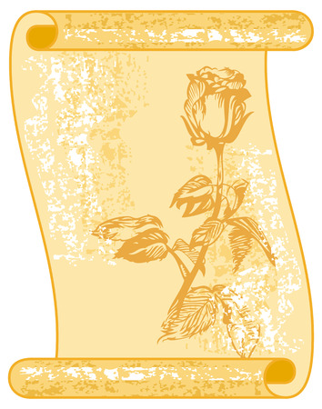 sapless: Paper scroll with hand drawn rose Illustration