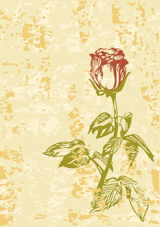withered: Grunge background with hand drawn rose Illustration