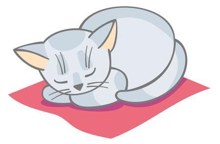 weiße Katze schlaf