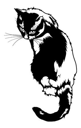 흰색 배경에 고립 된 검은 고양이 실루엣 일러스트