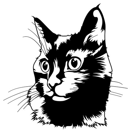 silueta de gato: Silueta del gato negro sobre un fondo blanco