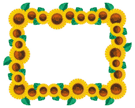 oil crops: Horizontal frame with sunflowers. Vector clip art.