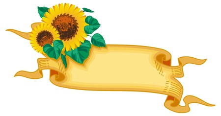 paper scroll: Paper scroll with sunflowers. Vector clip art. Illustration