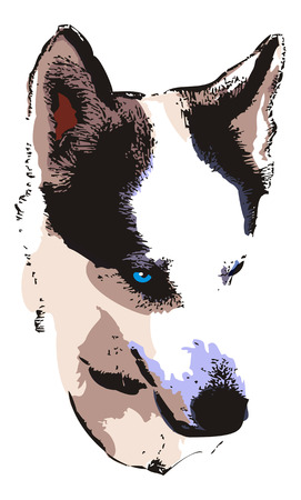dog sled: Husky head close up. Computer imitation of a hand drawn sketch. Vector clip art. Illustration