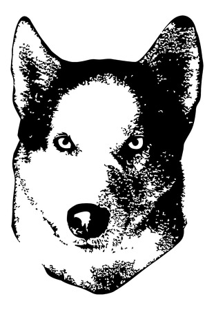 Husky head close up. Computer imitation of a hand drawn sketch. Vector clip art. Illustration