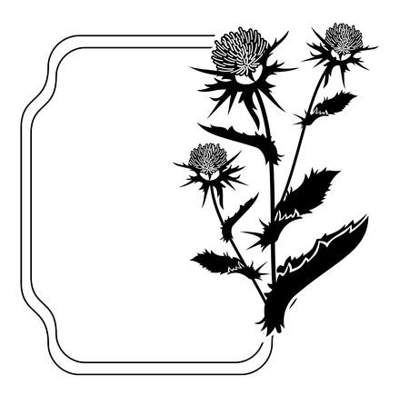 Cornice decorativa con silhouette di cardo. ClipArt vettoriali. Archivio Fotografico - 81917119