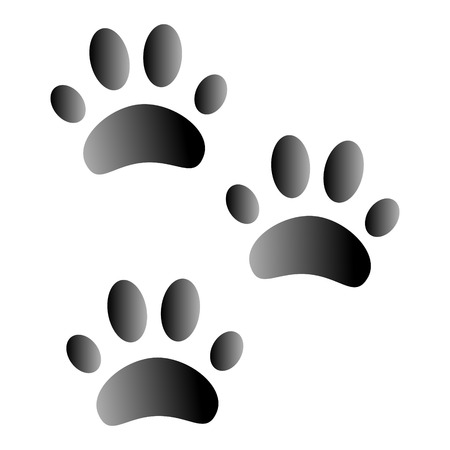 Animal footprints on white background seen from above