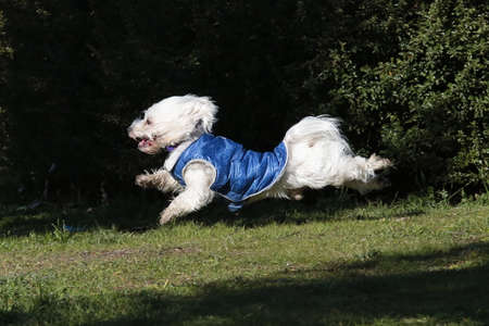 jump in race of a dog
