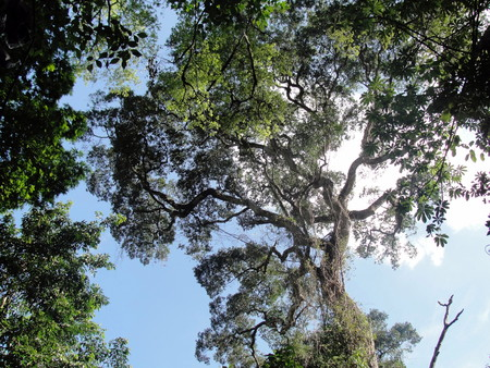 treetop: Fabulous treetop