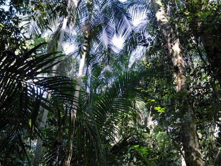 subtropical: Interior view of subtropical forest