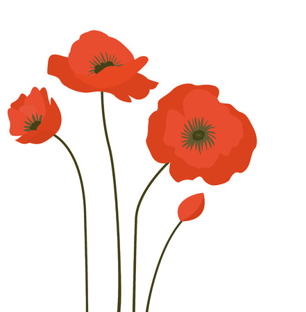 ease: Red poppies isolated on a white background. Stock Photo