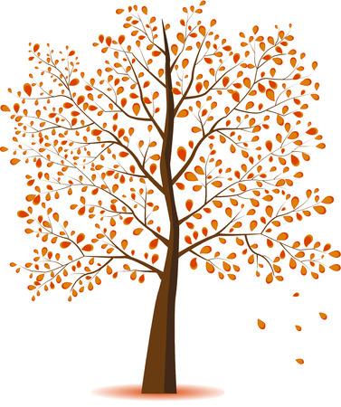 Autumn Tree on white background. Stock Photo