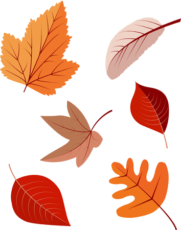 Collection of colorful autumn leaves isolated on white