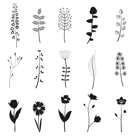 Set of flower elements for design isolated on white