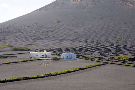 Typical vineyard in La Geria, Lanzarote, Canary Islands, Spain photo