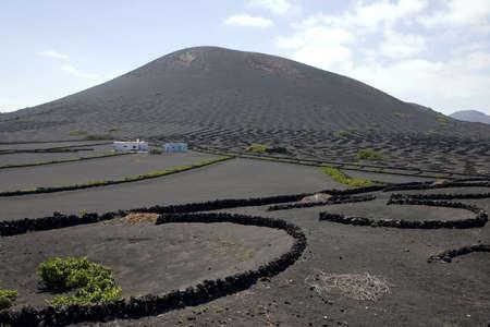 vineyard plain: Typical vineyard in La Geria, Lanzarote, Canary Islands, Spain Stock Photo