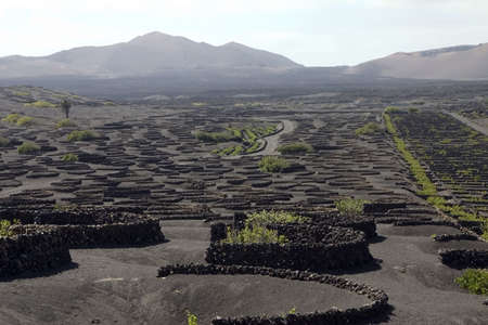 Typical vineyard in La Geria, Lanzarote, Canary Islands, Spain Stock Photo
