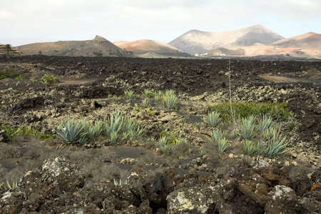 Volcanic landscape in Lanzarote, Canary Islands, Spain photo