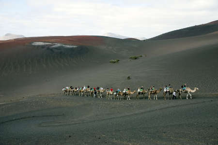 Camel ride at Timanfaya National Park, Lanzarote, Canary Islands, Spain