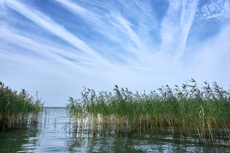 Lake landscape with thickets of reeds, inverse traces of airplanes in the sky, airway Stock Photo