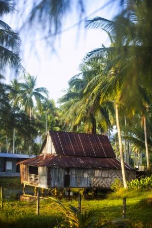jardineras: C�mara de los plantadores de coco Foto de archivo