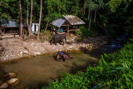 bevoelen: Om een olifant baden, de olifant in de bescherming tasten