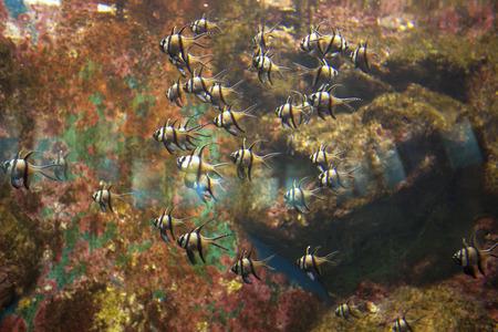 dive trip: Marine fish