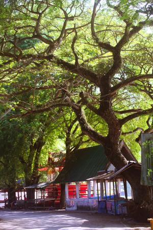 spoiled: Tree
