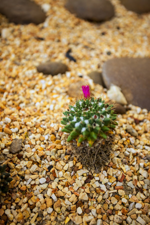 thorn tip: Cactus desert