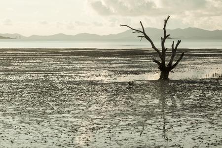 arboles secos: Árboles muertos en el Foto de archivo