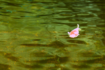 freshwater aquarium plants: Beautiful fish