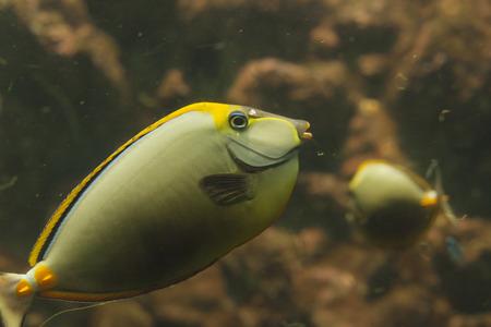 live coral: Marine fish