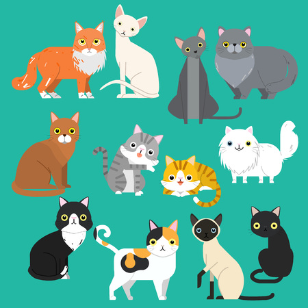 Funny cartoon cats characters different breeds cute pet animal set, vector illustration