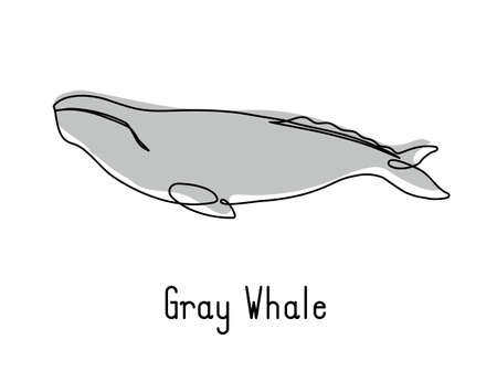 Single continuous line drawing of gray whale for marine company logo identity. Big fish mammal animal mascot concept for business logotype. Modern one line draw design illustration vector graphic Illusztráció