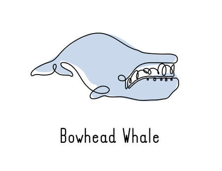 Single continuous line drawing of bowhead whale for marine company logo identity. Big fish mammal animal mascot concept for business logotype. Modern one line draw design illustration vector graphic Illusztráció
