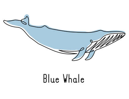 Single continuous line drawing of blue whale for marine company logo identity. Big fish mammal animal mascot concept for business logotype. Modern one line draw design illustration vector graphic