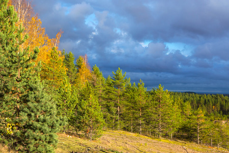 enveloping: Fir trees on the hill, enveloping cumulus clouds. It seems that it will rain soon