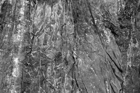 abstractly: Black and white texture of kelp (seaweed), looks abstractly