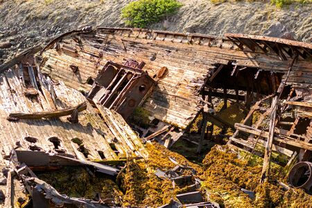 A large wrecked ship lies on its side on the seashore. Rust Peeps through the skeleton of the ship, plants sprout through the old tree
