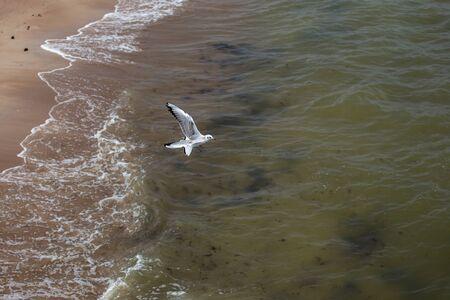 Seagull in the Sky. Palanga, Lithuania Stock fotó - 131889664