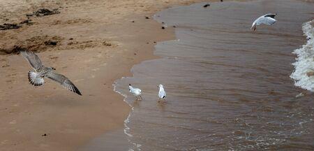 Seagulls in the beach. Palanga, Lithuania. Banco de Imagens