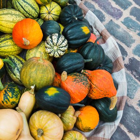 pumpkins gourds: Pumpkins. Assortment of pumpkins, gourds. Autumnal harvest, market.