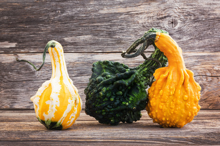 gourds: Yellow and green pumpkins on old wooden background. Gourds Stock Photo