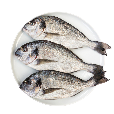 sparus: Fresh dorada fish on white plate isolated over white. Top view