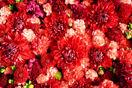 Beautiful red flowers background. Aster flowers, Top view