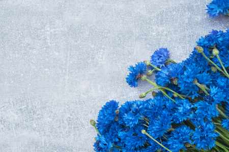 Blue Cornflower border on gray background. Flat lay, top view, copy space. Summer concept